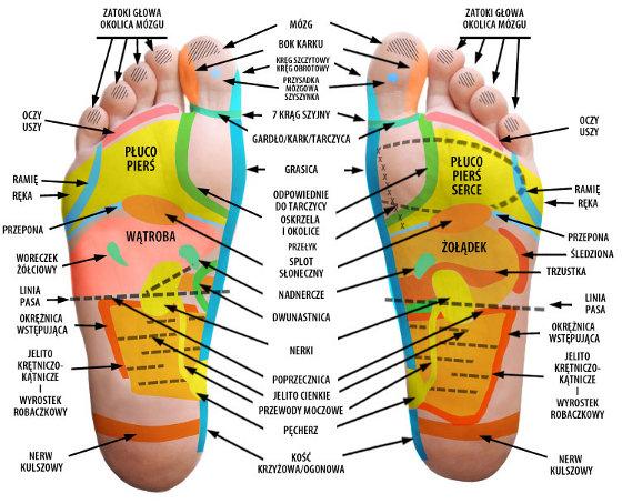 refleksoterapia - obszary